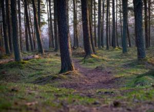 A path through the trees near Kinnoul.